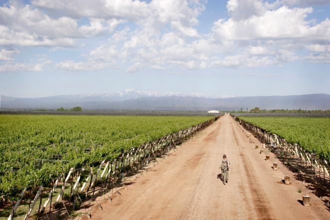 Maipu wineyards